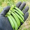 雨上がりの収穫物