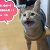 小腹が空いたらちゅるっとスティック!!(240日目)