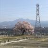 2018/4/1 わに塚の桜、そのあと新倉山公園、そして温泉