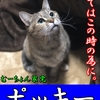【猫ブログ】むーちょん家 総選挙 no.1 ポッキー