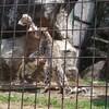 多摩動物公園に行ってきました