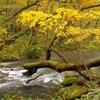 奥入瀬の秋。奥入瀬渓流