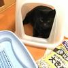 トイレ掃除手伝いましょうか?