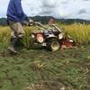 稲を刈る(2017年9月15日その2)