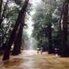 茨城のおすすめ観光スポット・自然・グルメ