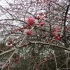 春告草と福告草