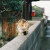 猫島、フィルムカメラでも