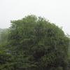 台風が通り過ぎていった日