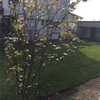 芝生をカット、そして粘土💧