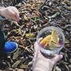 2歳児と工作、秋をテーマにDIY。