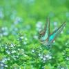 蛹は頑張らない方が蝶になれる。ゆっくりするのがお仕事な時期。