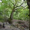 秋分の奥物部の森遊山 結