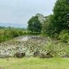 ひるがの湿原植物園の池(岐阜県郡上)