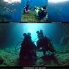 沖縄初ダイビングが青の洞窟