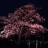 【梅だけじゃない】水戸で桜を見よう