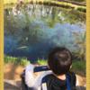 【山梨旅行①】忍野八海(世界遺産)でプチ巡礼 食べ歩きを楽しむ