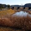 松山下公園の調整池(千葉県印西)