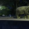 サマーナイトZOO in 茶臼山! ~夜の茶臼山動物園を巡る、夏季限定イベントへ~