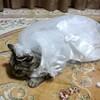 ニャーニャちゃんのウエディングドレス