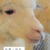 台湾名物アルパカカフェ(Oia伊亞藝術咖啡館)の場所・行き方・レポ!真っ白なアルパカにもふもふし放題⁉【台湾・台北】
