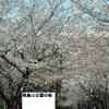 桜見物おすすめスポット