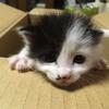 【収益化とSEO】猫ブログを作るうえでの明確な目標を立ててみる