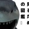 お子さんにおすすめのサメ図鑑トップ5/クマの動物研究より