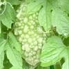 """畑からこんにちは! 0828  """" 野菜にとっては喜びの雨…?    """"   楽しみながら育てる家庭菜園!😃"""