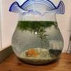 新入り金魚!