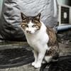 都会の路地で出会ったネコさんとのフォトセッションを楽しむ