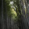 【嵐山】竹林の道 早い時間に行くのがおすすめ [京都]