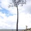 東北旅行はライフワーク ~岩手県陸前高田市で見つけたナチュラルアート~