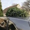 クリスマスツリーの買出し。