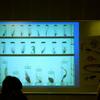 西条自然学校 第95回 標本の作り方