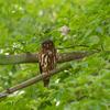 2019年7月15日の鳥撮り-千葉県