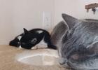 先住猫と新入り猫の1週間