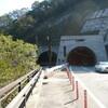 きびたき、石楠花トンネル