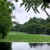 横浜港北、鶴見の水辺散策 緑、花、池を巡る