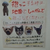 保護犬パーク長居店 2019.8.17