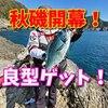 秋磯開幕!大月町古満目の磯で秋の磯魚を狙い打て!(動画もあるよ)