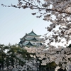 桜も来月前半で終わりかな。