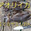 アオリイカ ヤエン釣り 秋イカ釣りに日本海 北陸福井県の筏へ