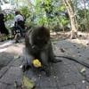 バリ島の大自然満喫ツアー