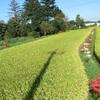 農園日誌ー短い秋の予感