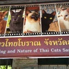 タイ猫保護施設の巻