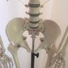 股関節の違和感