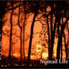 トルコの山火事、TRTの放送を見ながら泣いた日😢