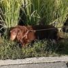 カエルファインダー犬とチョコレートガエル