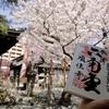 桜満開! 聖徳太子と石不動の御朱印 京都・六角堂(頂法寺)