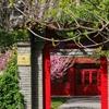 中国トップの全額奨学金修士プログラム 北京大学Yenching Academyとは